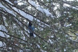 It's a bluebird